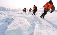 哈尔滨冰雕的冰采自哪里